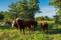 Photo of Yates Cattle and Conservation Ranch