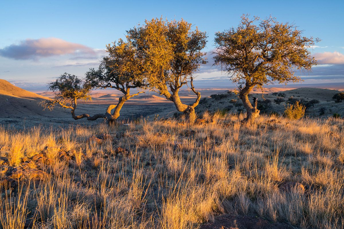 Photo of Medley Hills Ranch, small trees in grassland