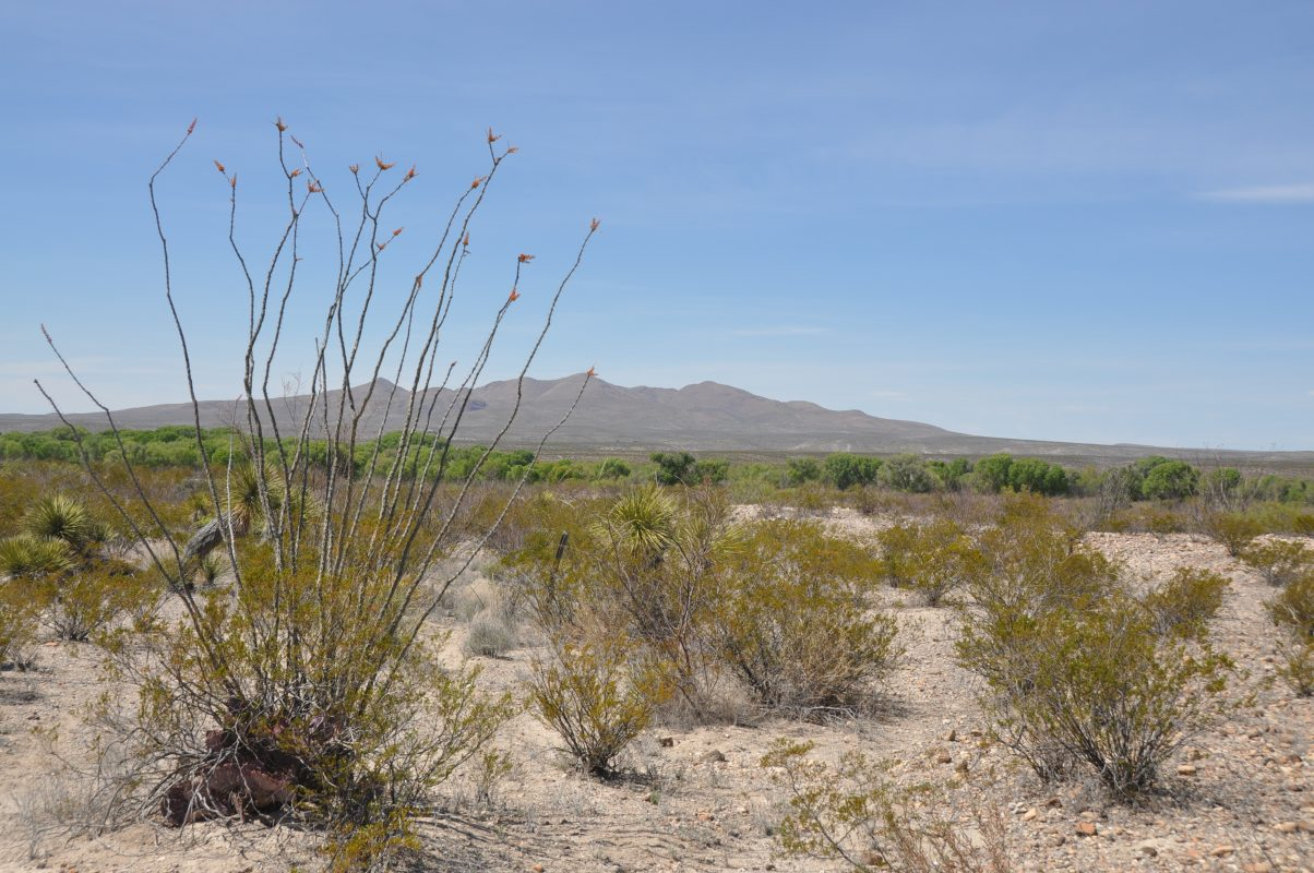 Photo of Alamito Waters Ranch, desert scrub
