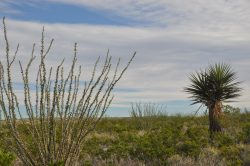 Photo of Kennedy Ranch, landscape with ocotillo and yucca