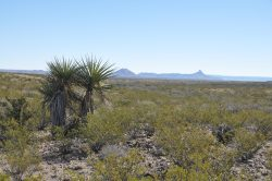 Photo of South Alamito Ranch, creosote and yucca with view of mountains