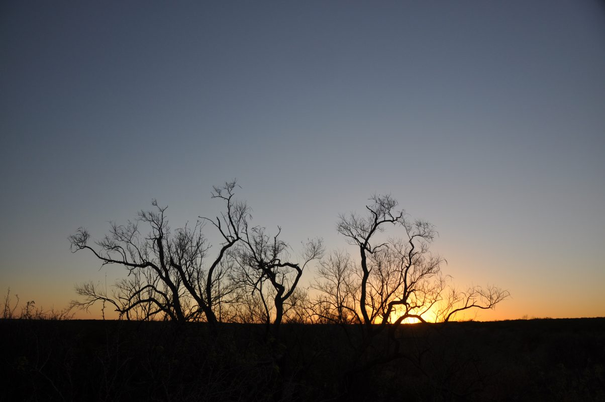 Photo of Coyanosa Draw Ranch, shrubs in silhouette at sunset