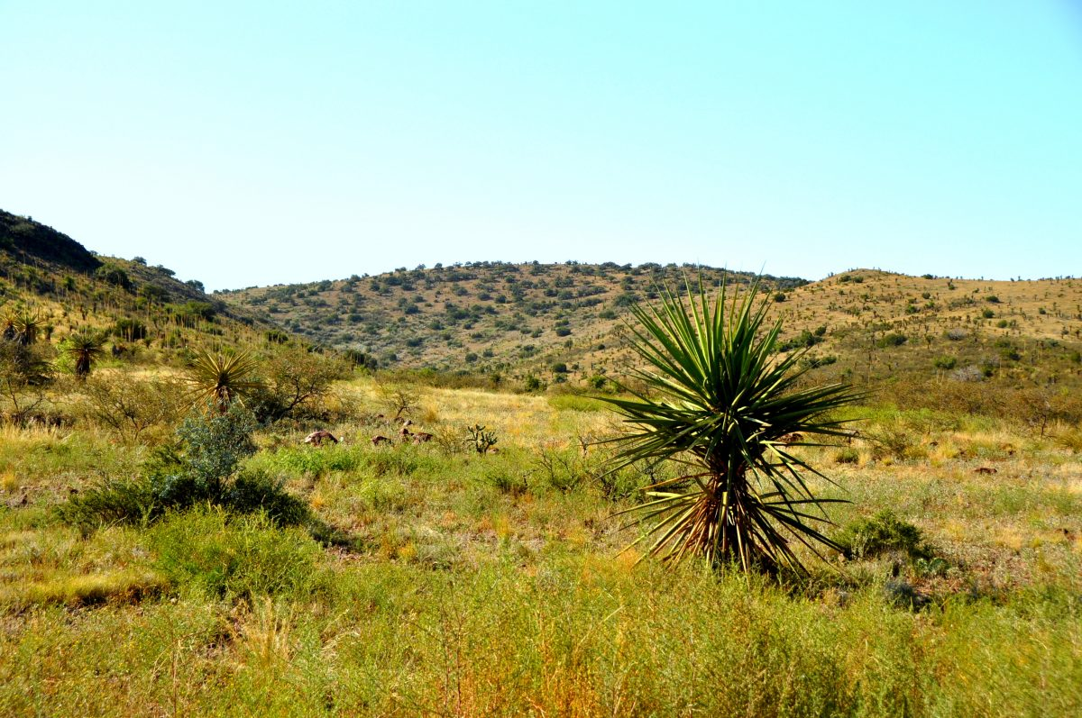 Photo of Stagecoach Ridge Ranch