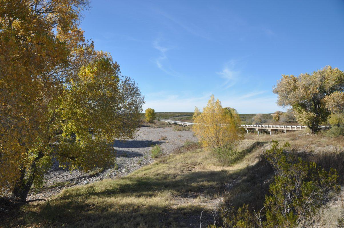 Photo of South Alamito Ranch, cottonwoods along Alamito Creek