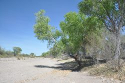 Photo of Alamito Waters Ranch, dry wash