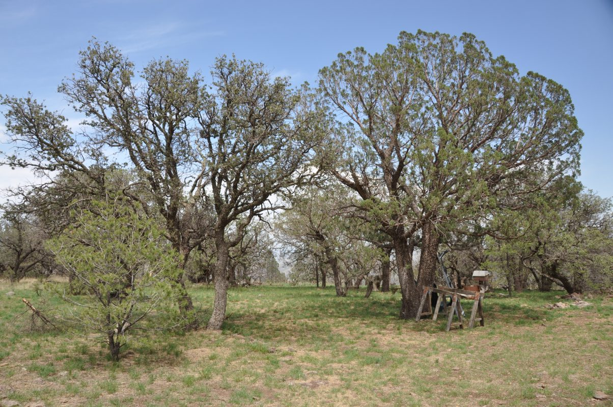 Photo of Skyline Ridge Ranch