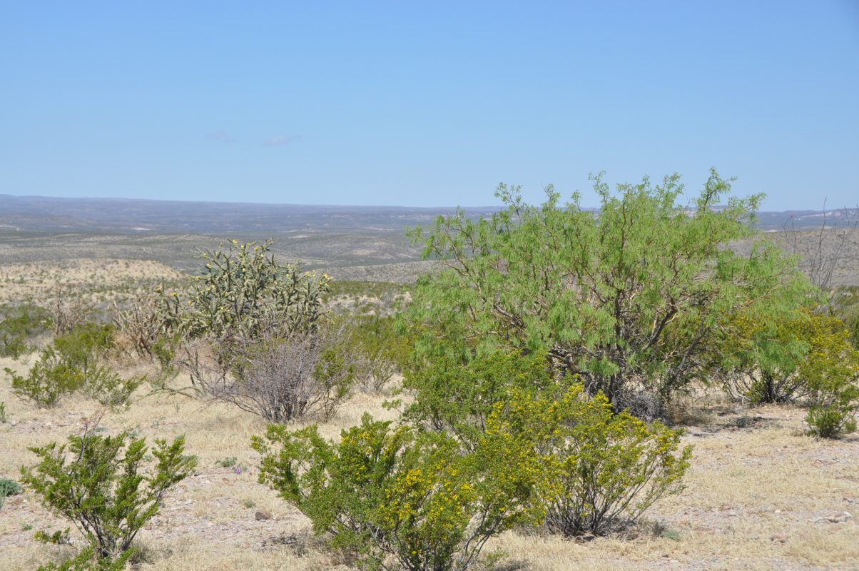 Photo of Kennedy Ranch, creosote and other desert plants
