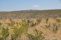 Photo of Kennedy Ranch, grassland with desert scrub