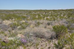 Photo of Kennedy Ranch, desert scrub