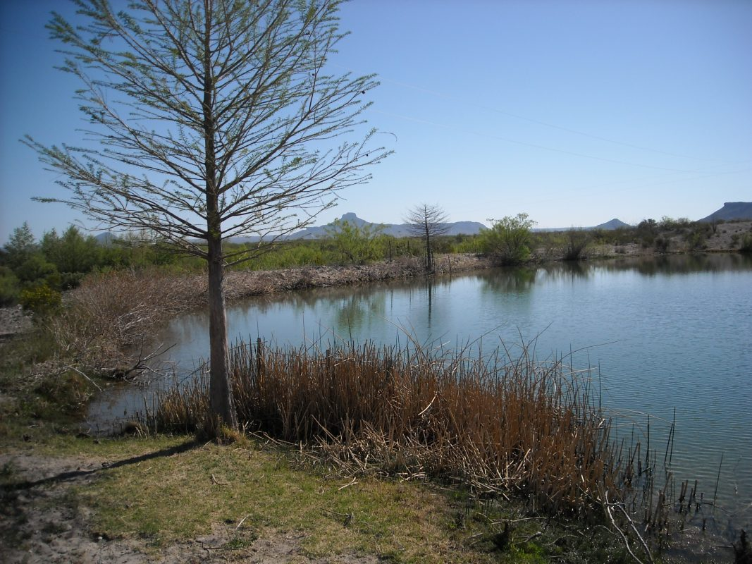 Photo of Alamito Waters Ranch, along the lake shore