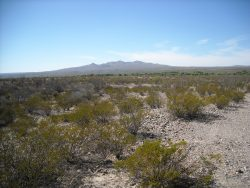 Photo of Alamito Waters Ranch, desert landscape with creosote