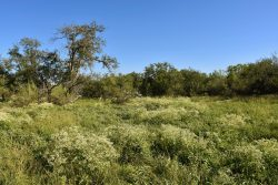 Photo of North Rock House Ranch, trees, grasses and wildflowers