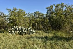 Photo of North Rock House Ranch, prickly pear cactus, grasses, and trees