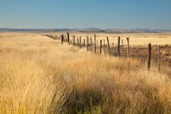 Photo of Quebec Ranch, grassland, fence