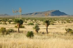Photo of Quebec Ranch, grassland with yuccas and distant Capote Peak