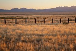 Photo of Quebec Ranch, grassland and fence in first light, distant Davis Mountains
