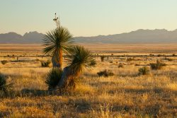 Photo of Quebec Ranch, grassland and yuccas, distant Davis Mountains