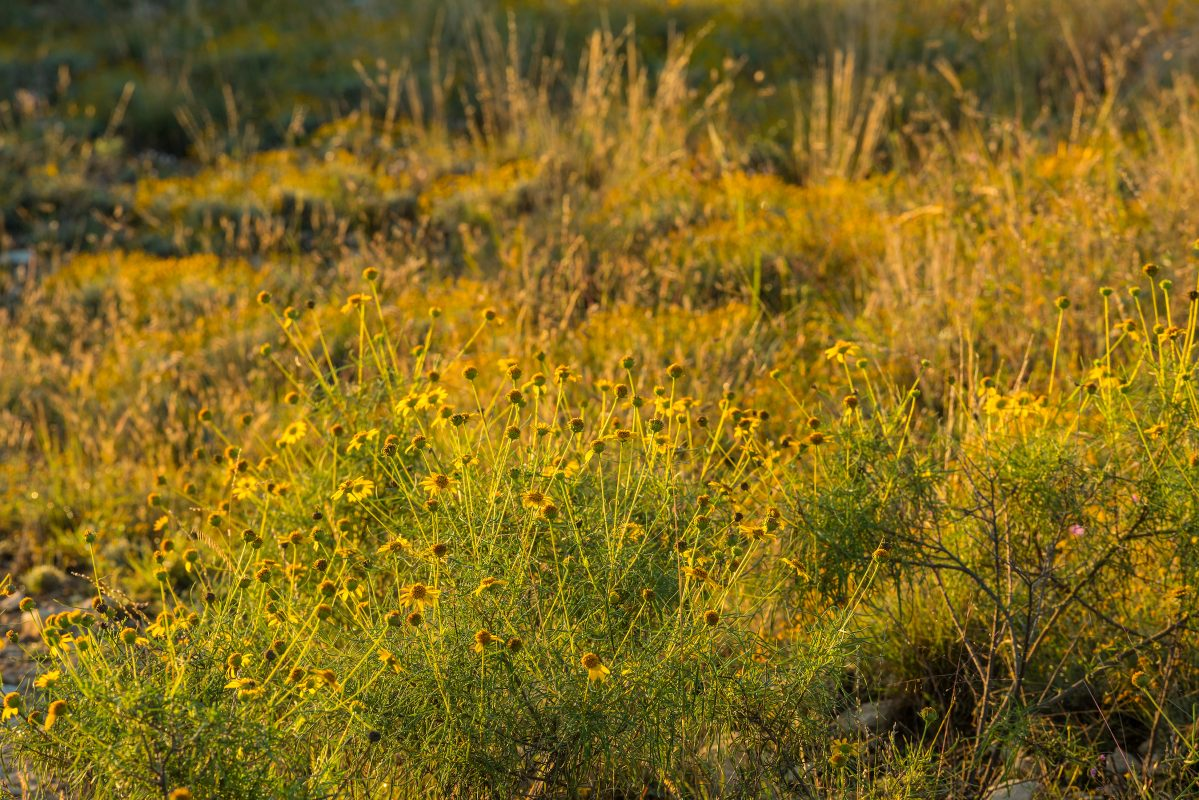 Photo of High Mesa Ranch, wildflowers