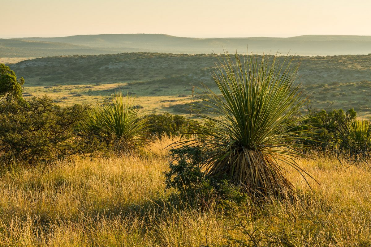 Photo of Rock House Draw Ranch, view of grassland valley and sotol
