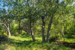 Photo of Rock House Draw Ranch, trees