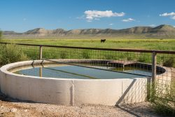 Photo of Red Mill Ranch, cattle in grassy valley, water tank