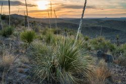 Photo of Black Hills Ranch, Cerros Prietos, sunrise, sotol plants