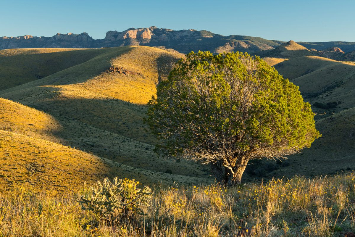 Photo of Barrel Springs Ranch, tree and hills
