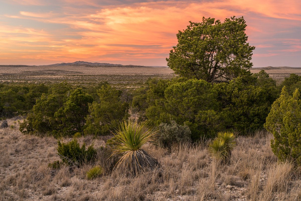 Photo of Comanche Trail Ranch, junipers and yuccas at sunset