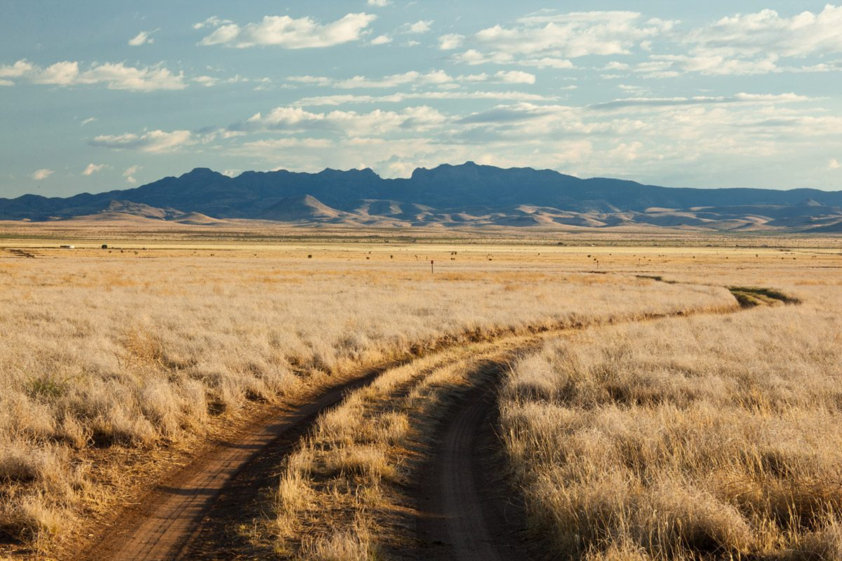 Photo of South Ryan Ranch, road through grassland